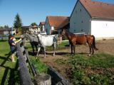 Koníci pro jízdu a naše hosty